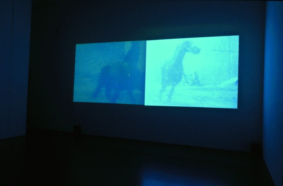 malcolm le grice berlin horse installation shot 1970